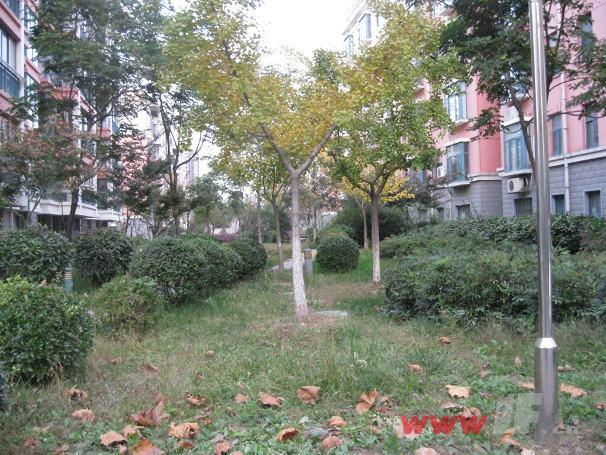 颐和花园小区内绿化