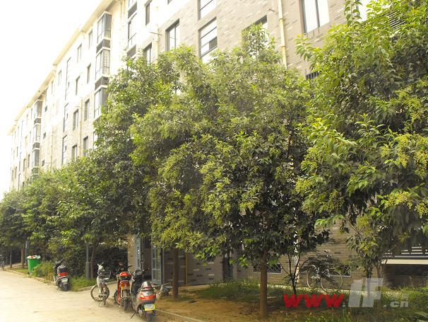 温哥华国际花园小区内绿化