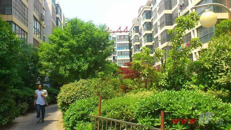 兆隆城市洋房小区内绿化