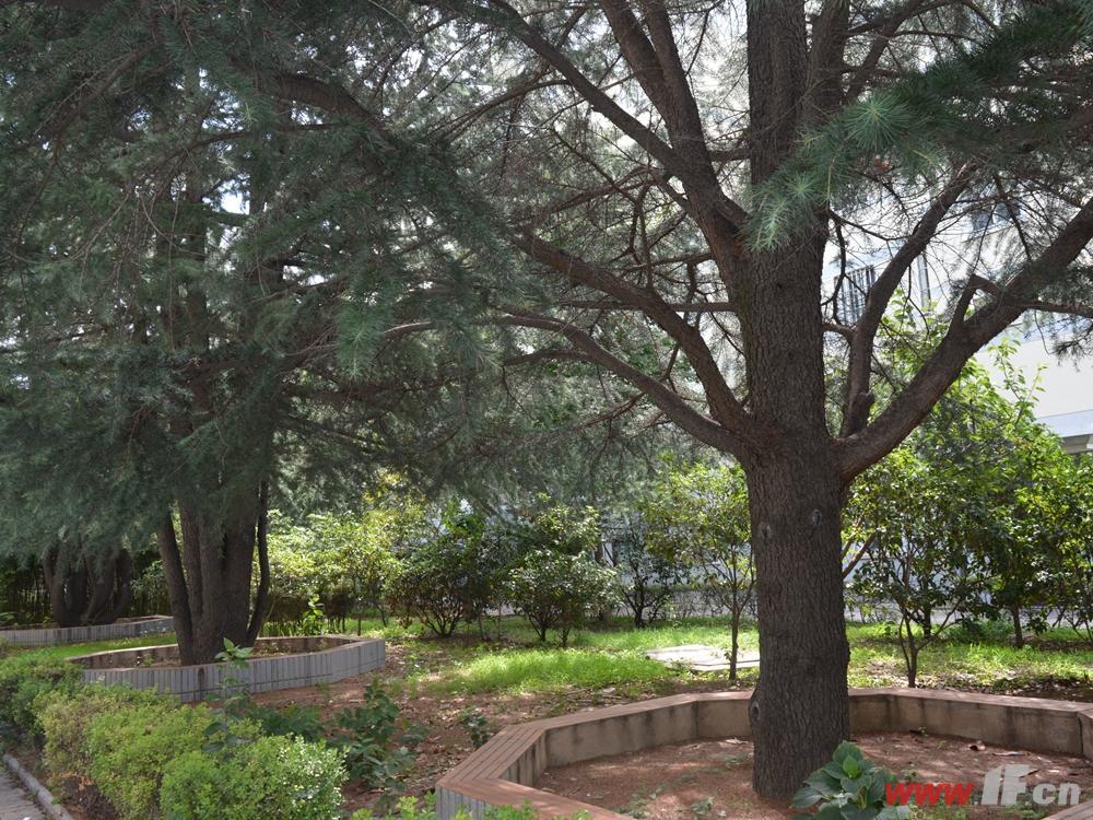 万山城市花园小区绿化