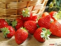 采摘春天 祥生春日草莓采摘之旅出发在即
