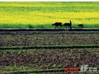 """农村土地制度改革向""""难点""""推进"""