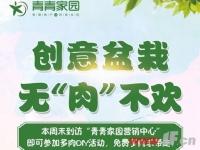 """""""小鲜肉""""来袭 青青家园本周末多肉DIY"""